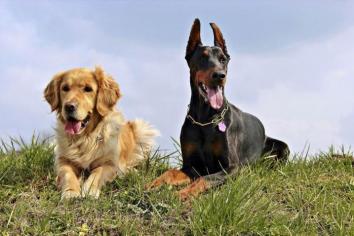 Image Dog breeds