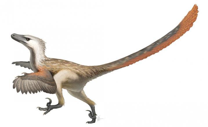 Raptorji