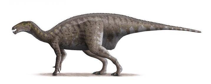 Ornitopodi