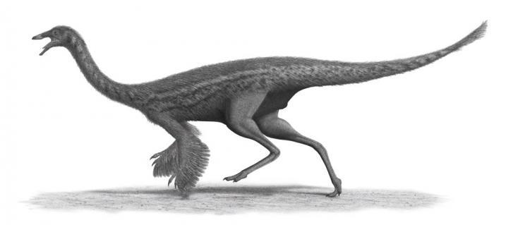 Ornithomimids