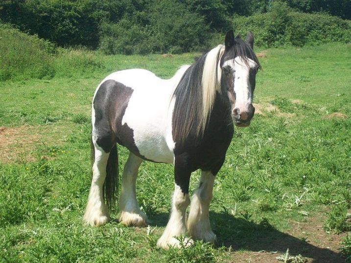 Ciganski konj